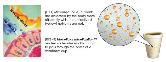 biocellular micellization process